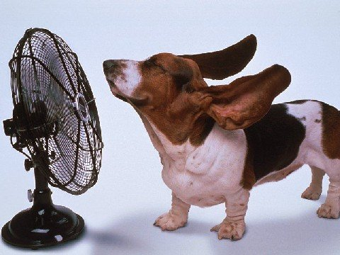 chienventilateur.jpg